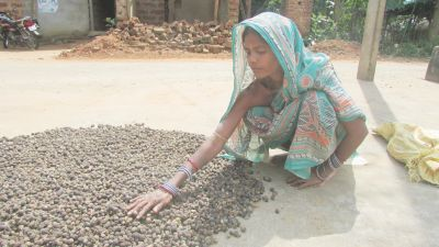 mallika_drying_up_soap_nuts